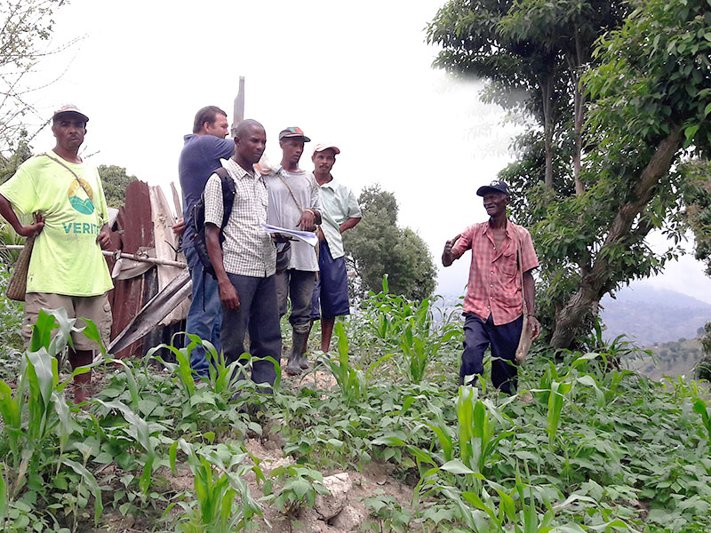 Haitian farmers increase bean yields